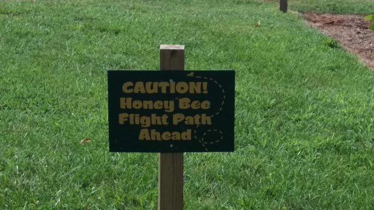 Honey Bee Flight Path.jpg