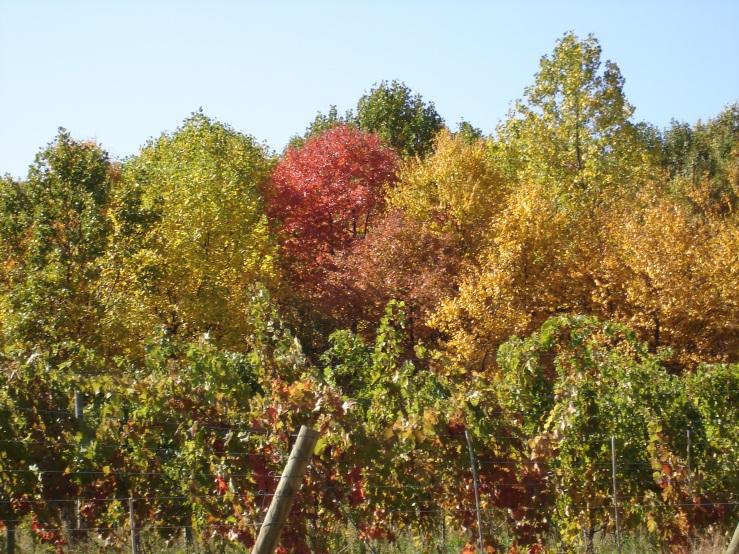 Autumn at Linden