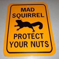 squirrels don't feed mad nuts