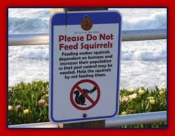 squirrels don't feed pacific ocean
