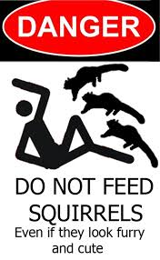 Squirrels don't feed
