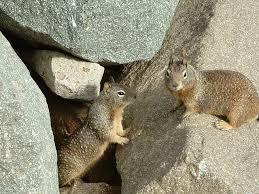 squirrels ground
