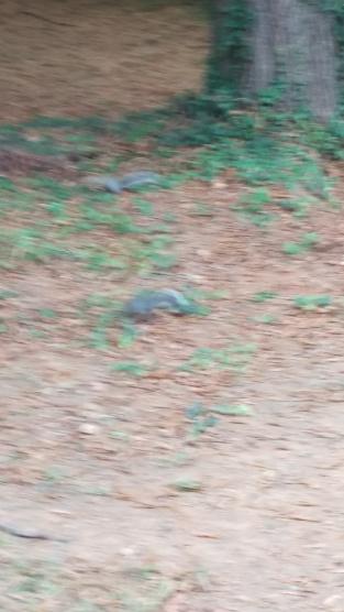 squirrels in yard