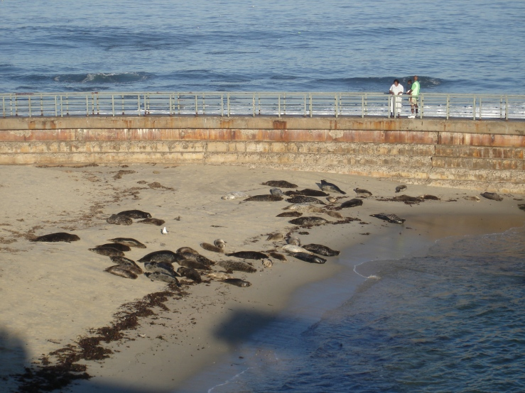 children's pool harbor seals
