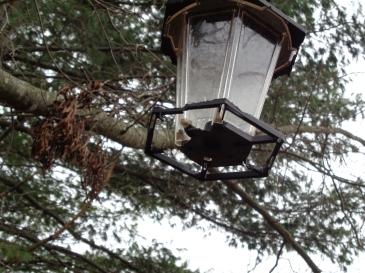 Squirrel feeder chewed through