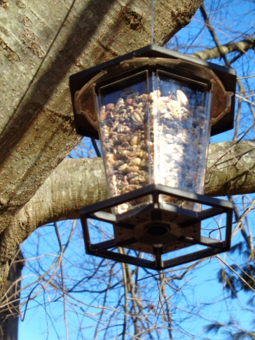 Squirrel feeder new--not yet disovered