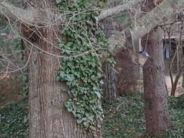 Squirrel feeding upside down at new feeder