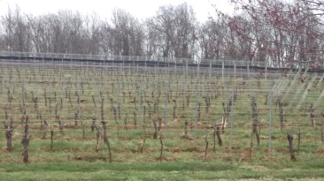 Barboursville vineyard on Easter Sunday
