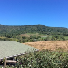 Vineyard and Skyline Drive