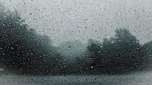 rain on forest