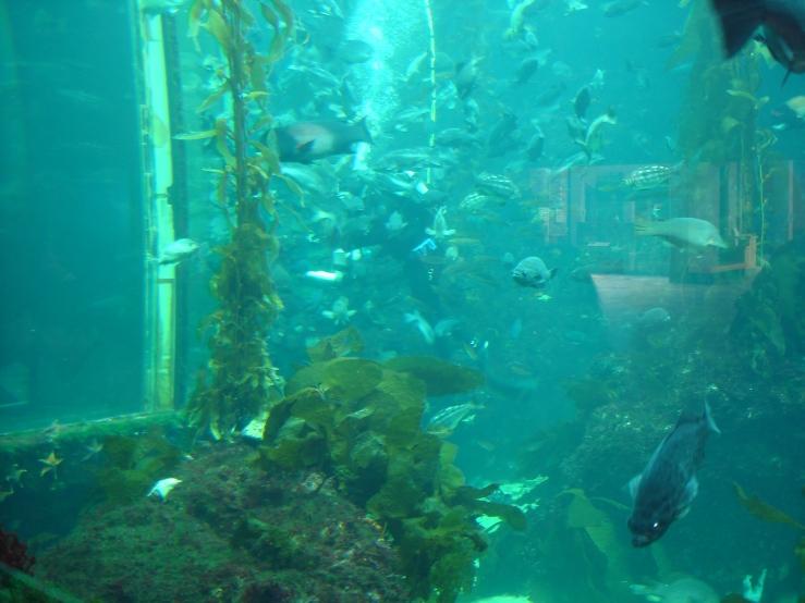 Monterey 031