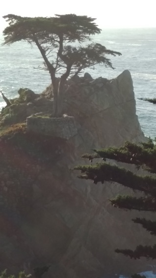 lone cypress with perspective