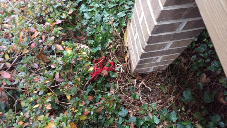 squirrel ramains of second food wreath onthe ground.jpg