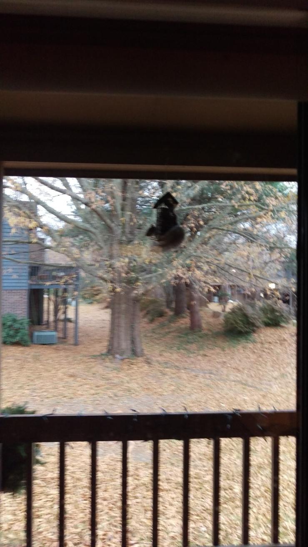 squirrels--return on hoover