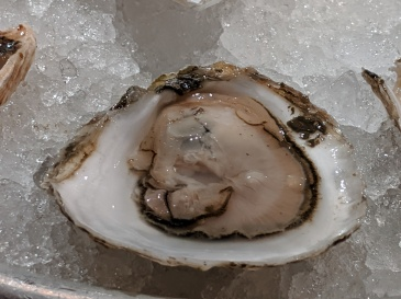 Pink Moon Oyster on ice