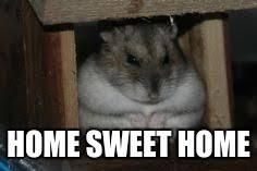 home sweet home hamster