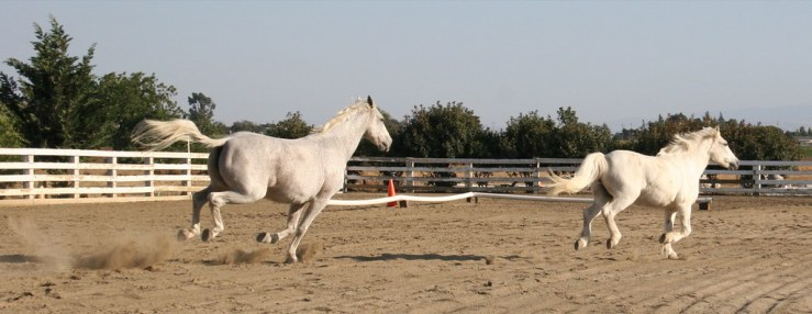 horse kicking up its heels