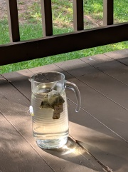 sun tea- brewing beginning