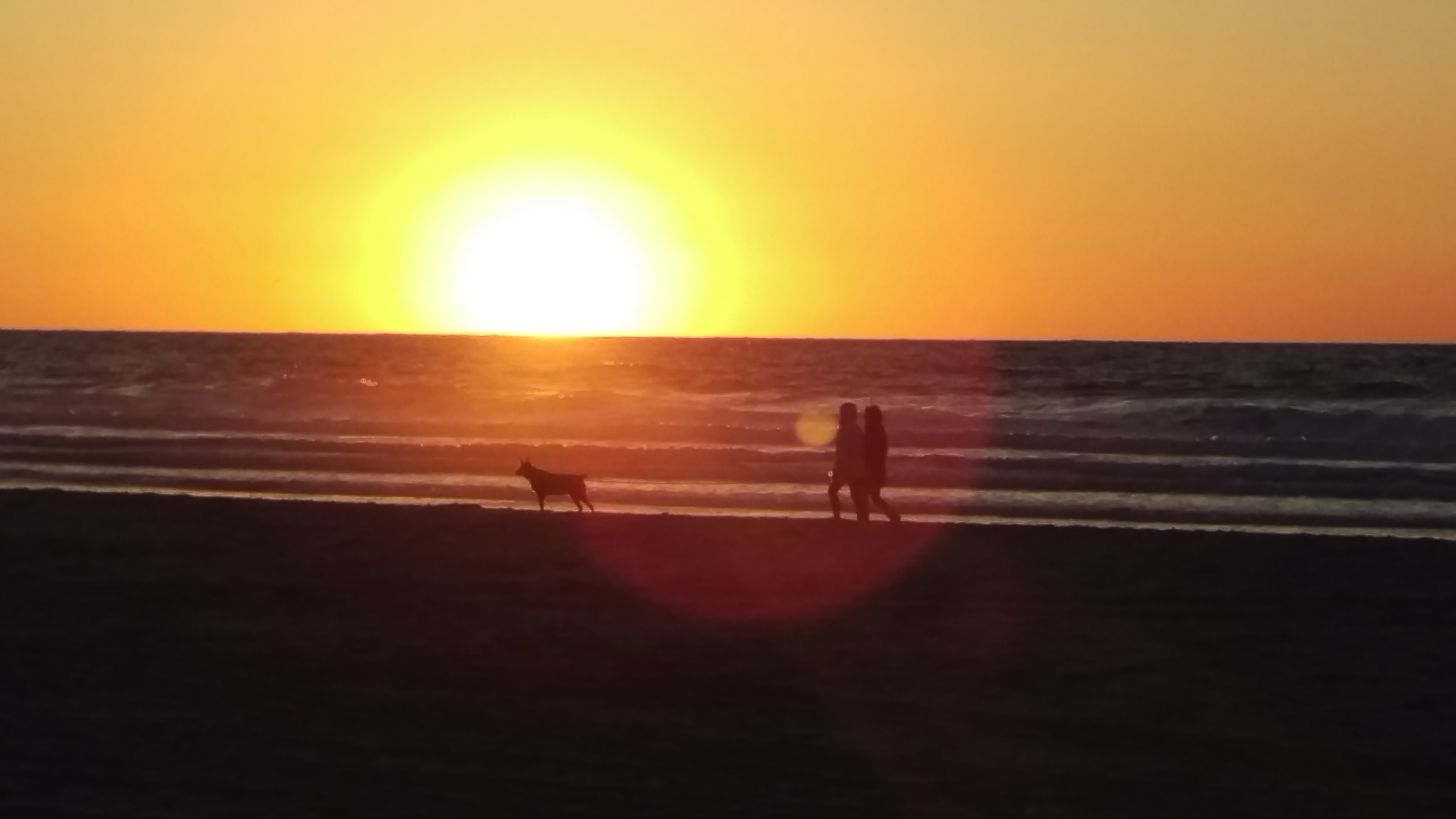 Couple and dog walking at sunset