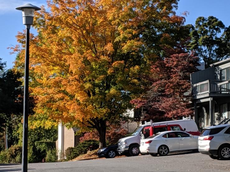 Fall--Multi-colored leaves