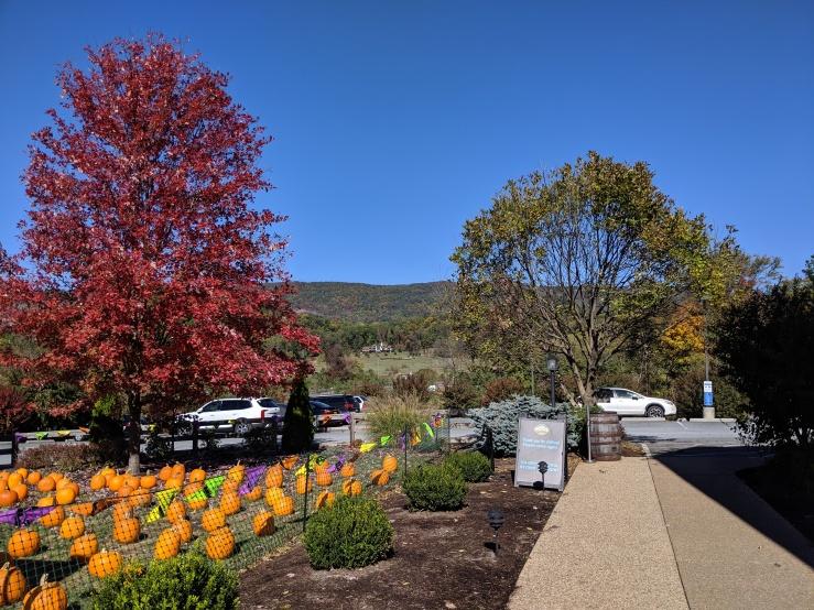 Fall-pumpkins from Blue Mountain